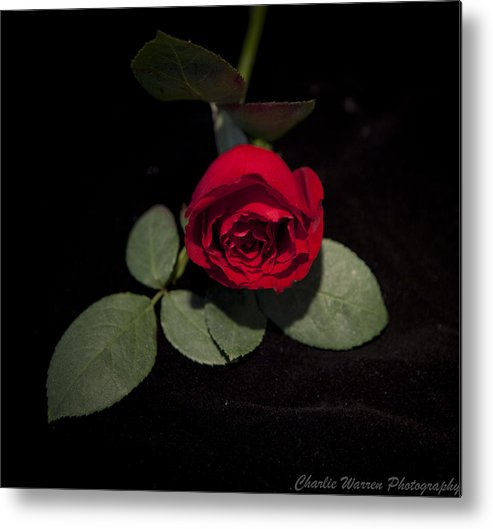 Rose Metal Print featuring the photograph The Rose by Charles Warren