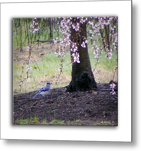2d Metal Print featuring the photograph Blue Jay by Brian Wallace