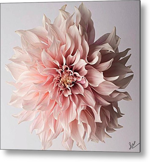 Flower Pink Elegant Breathtaking Metal Print featuring the photograph Floral Elegance by Sarah Waldman