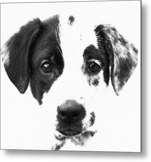 Dogs Metal Print featuring the photograph Karma by Amanda Barcon
