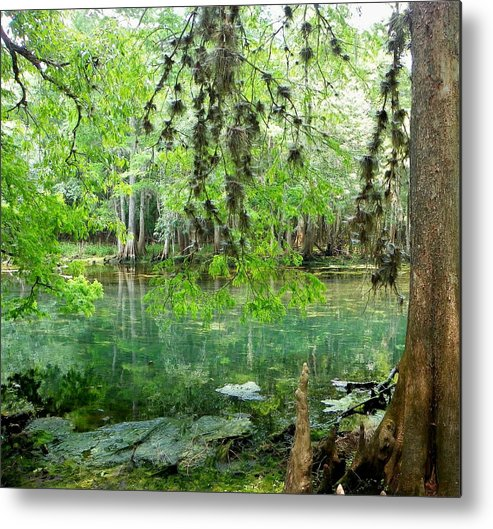Manatee Springs Chiefland Florida Metal Print featuring the photograph Manatee Beauty II by Sheri McLeroy