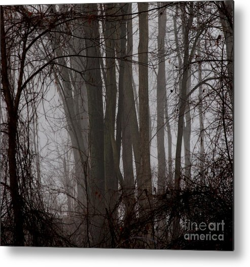 Woods Metal Print featuring the photograph Winter Woods by Linda Shafer