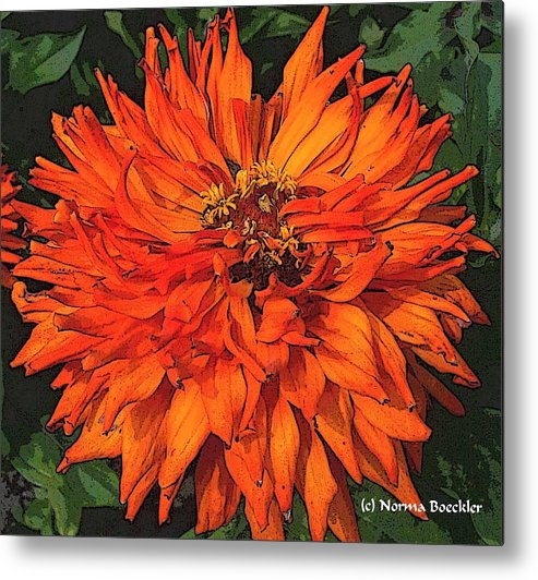 Flower Photography Metal Print featuring the painting Zinnia by Norma Boeckler