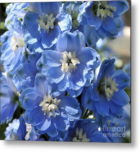 Flower Metal Print featuring the photograph Blue Delphinium 9656 by Terri Winkler
