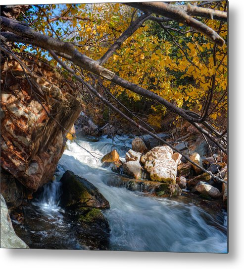 Water Metal Print featuring the photograph Fall Cottonwood I by Tom Stonehocker