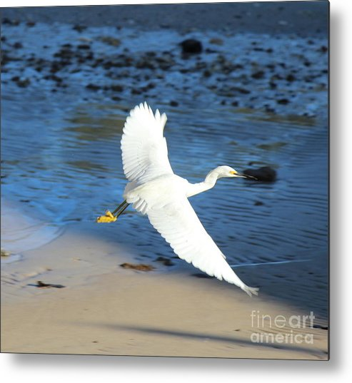Metal Print featuring the photograph In Flight by Jessica Christensen