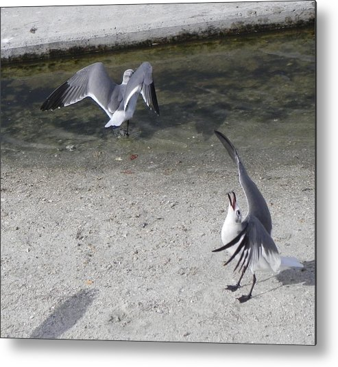 Seagull Metal Print featuring the photograph Singing For Dinner by Cynthia N Couch