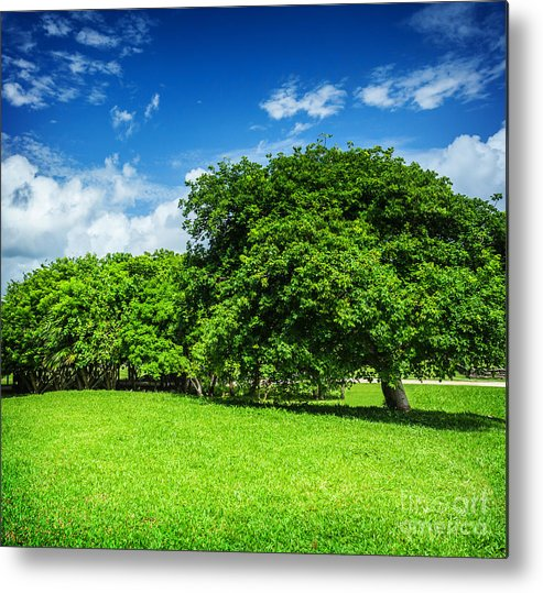 Background Metal Print featuring the photograph Spring Park by Anna Om