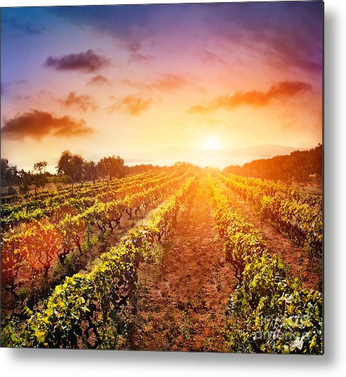 Mythja Metal Print featuring the photograph Vineyard by Mythja Photography