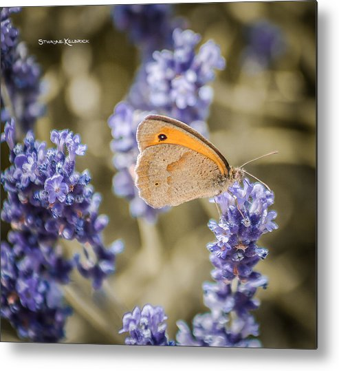 Butterfly Metal Print featuring the photograph Waiting For The Next Step by Stwayne Keubrick