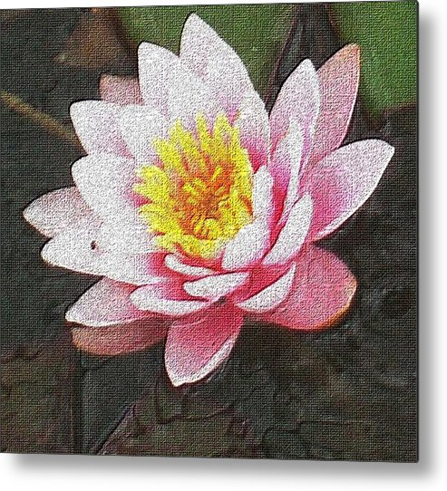 Lotus Metal Print featuring the photograph Lotus In The Rain 3 by Cj Carroll