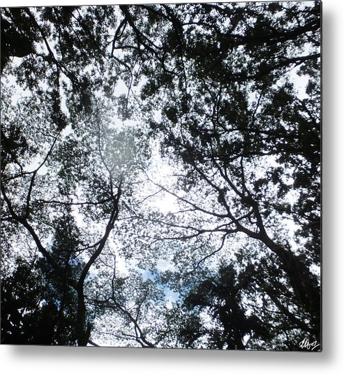 Tree Canopies Metal Print featuring the photograph Nebula by Laura Hol Art