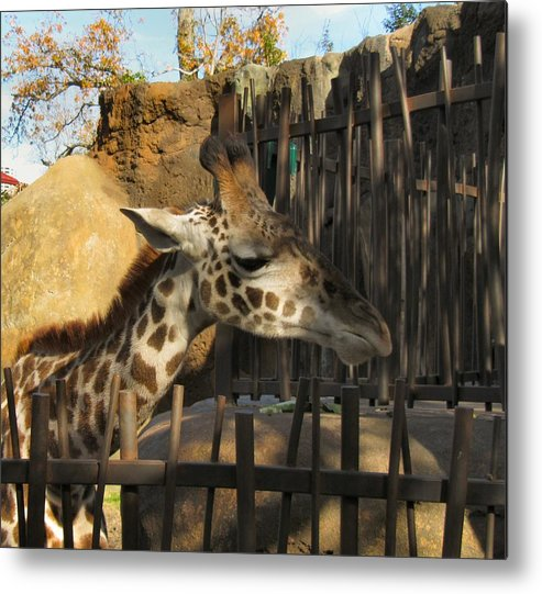 Giraffe Metal Print featuring the photograph Can We Talk by Camera Candy