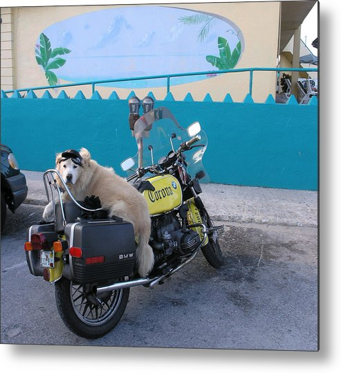 Motercycle Metal Print featuring the photograph Dogs Rule by Jim Derks