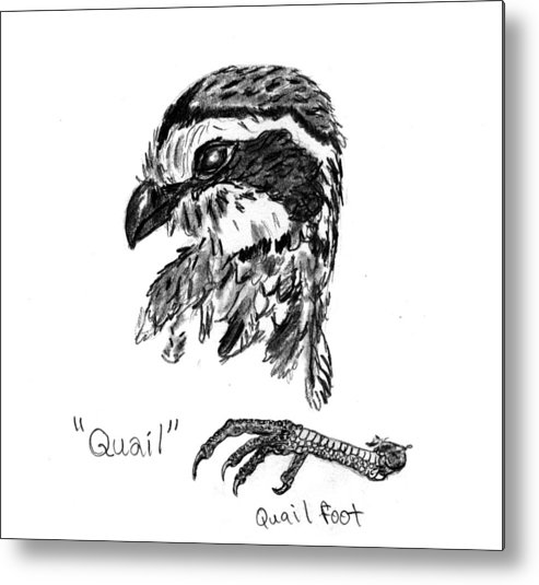 Quail Metal Print featuring the drawing Quail Head With Foot by Kevin Callahan