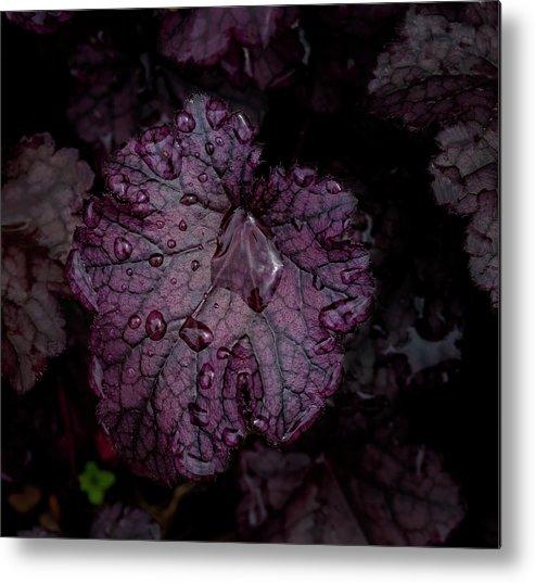 Rain Metal Print featuring the photograph Rain Drops 23 Leaves by Robert Ullmann