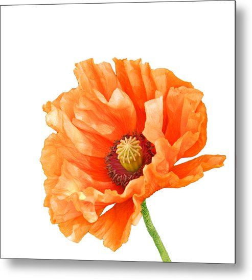 Poppies Metal Print featuring the photograph Perfect Poppy by Sharon Lisa Clarke