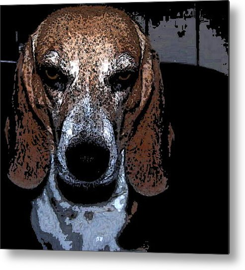 Beagle Metal Print featuring the photograph Lady 3 by April Patterson