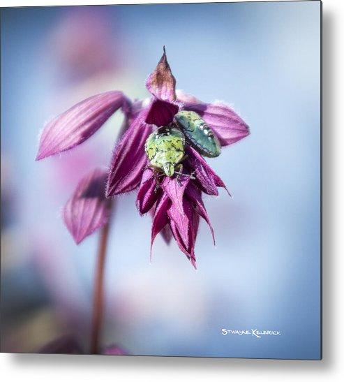 Nature Metal Print featuring the photograph Natural Bug Life by Stwayne Keubrick