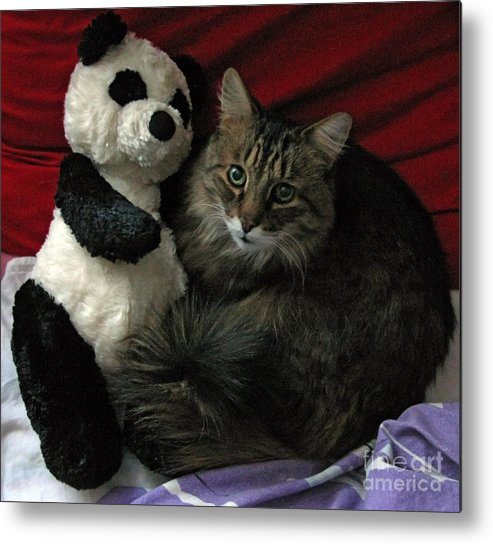 Pets Metal Print featuring the photograph The King Kitty And Panda 01 by Ausra Huntington nee Paulauskaite