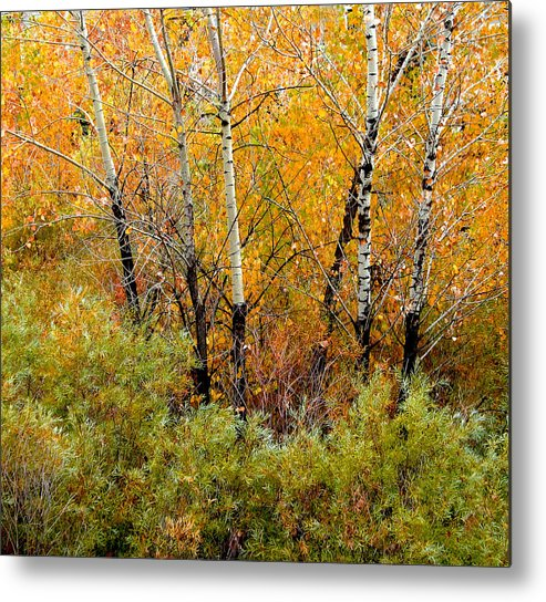 Trees Metal Print featuring the photograph 1087 by Peter Holme III