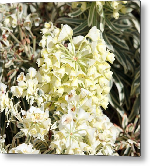 Nature Metal Print featuring the photograph Flowers - 0052 by S and S Photo