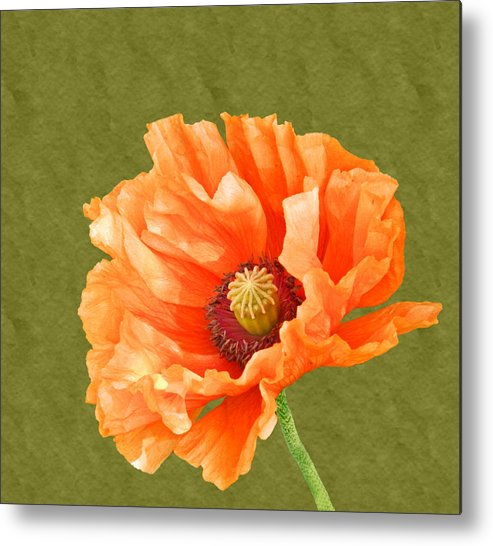 Poppies Metal Print featuring the photograph Poppy by Sharon Lisa Clarke