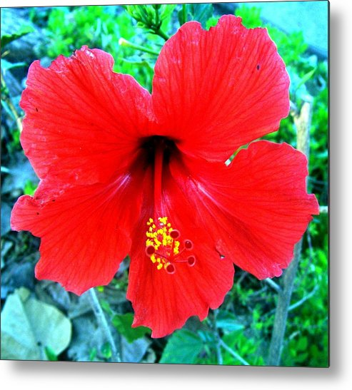 Red Metal Print featuring the photograph Red Hibiscus by Heidi Kummer