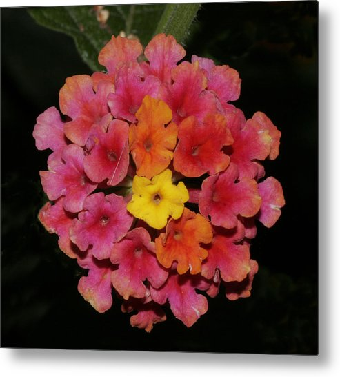 Flower Metal Print featuring the photograph Flower by Masami Iida