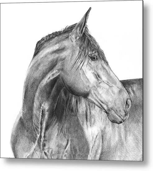 Horse Metal Print featuring the drawing Attention Seeker by Dana John