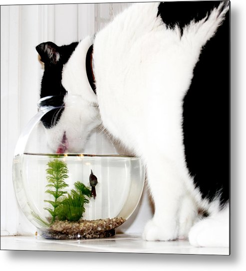 Cat Metal Print featuring the photograph Best Friends by Danielle Miller