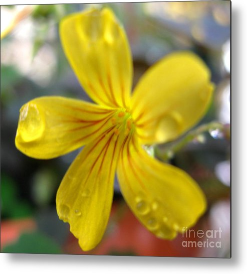 Flower Metal Print featuring the photograph Blooming Clover by PJ Cloud