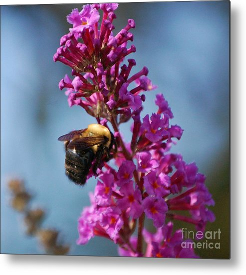 Bee Metal Print featuring the photograph Buzzed by Debbi Granruth