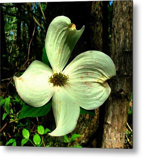 Dogwood Blossom Metal Print featuring the photograph Dogwood Blossom I by Julie Dant