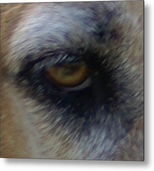 Eyes Metal Print featuring the photograph Eye Of The Beholder by Debbie May