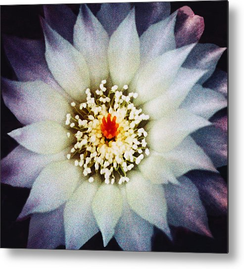 Floral Metal Print featuring the photograph Floral Closeup One by Robert Gladwin
