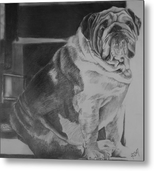 Dog Metal Print featuring the drawing Making Laugh Lines Trendy by Darcie Duranceau