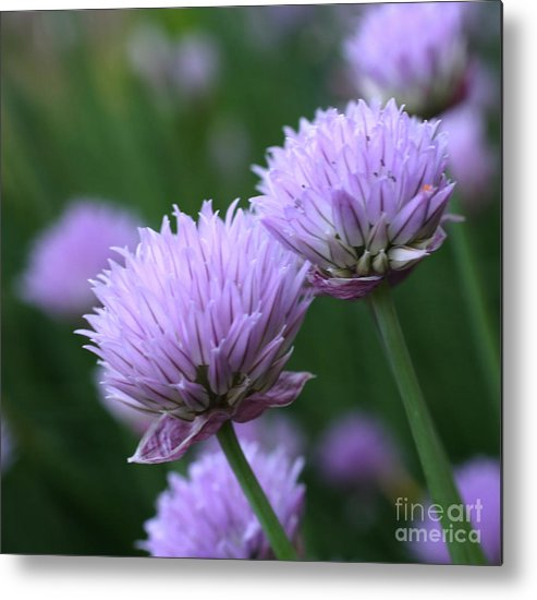 Flower Metal Print featuring the photograph Purple Twins by Smilin Eyes Treasures