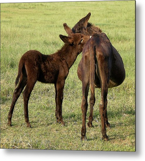 Animals Metal Print featuring the photograph Tell Me A Secret by Jan Amiss Photography
