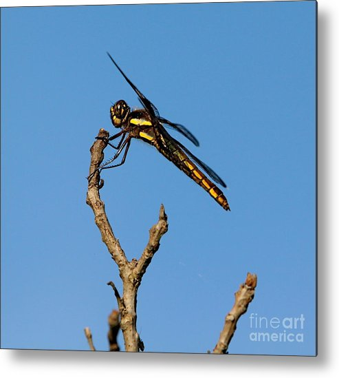 Insect Metal Print featuring the photograph The Landing Pad by Robert Pearson