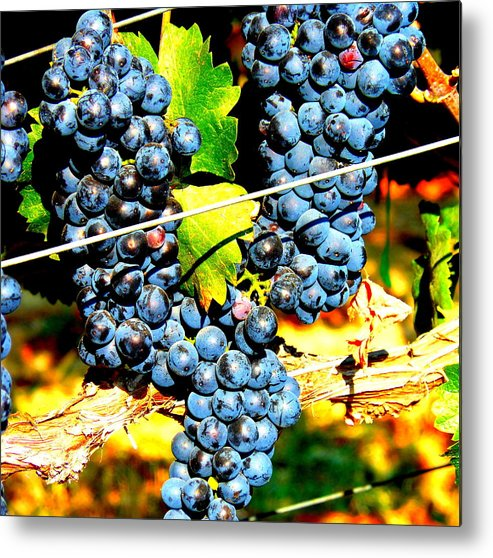 Grapes Metal Print featuring the photograph Grapes On The Vine by Kay Gilley