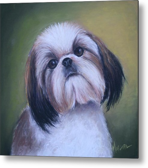 Sigh Tzu Metal Print featuring the painting Jenny Wren Shih Tzu Puppy by Melinda Saminski