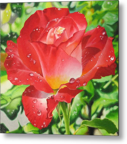 Red Rose Metal Print featuring the painting Morning Rose by Art Carrillo