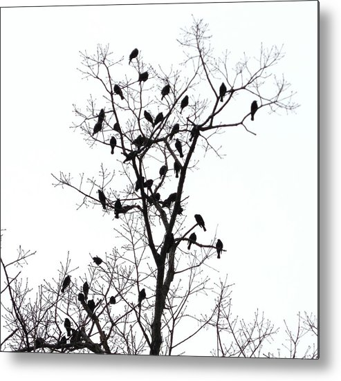 The Birds Metal Print featuring the photograph The Birds by Stacey Pollio