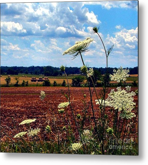 Queen Annes Lace Metal Print featuring the photograph Queen Annes Lace And Hay Bales by Julie Dant