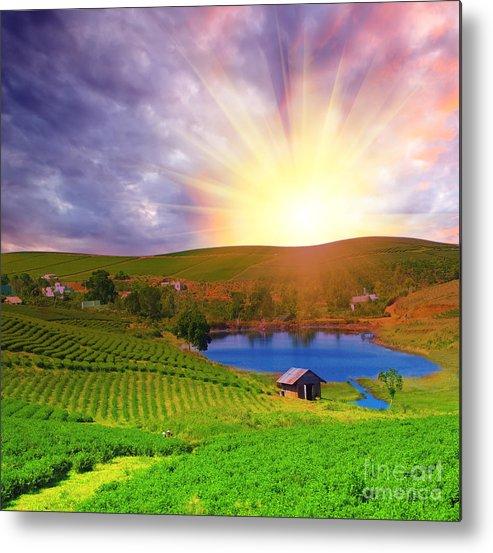 Sun Metal Print featuring the photograph Tea Plantation by MotHaiBaPhoto Prints