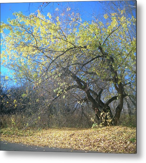 Tree Metal Print featuring the photograph Wolley by Oleg Deetz