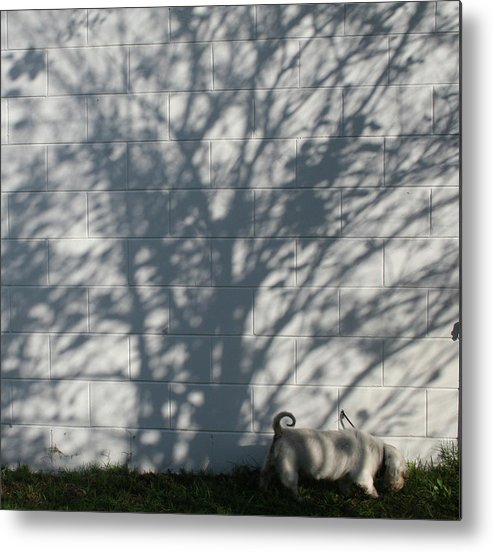 Photography Metal Print featuring the photograph Curly Tail by Susana Maria Rosende
