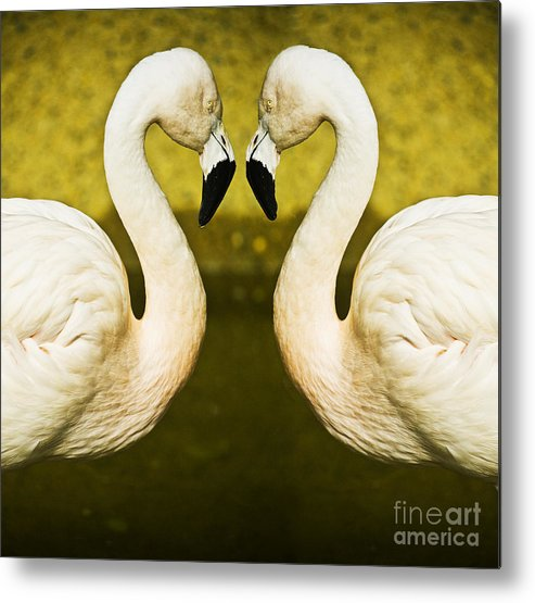 Flamingo Metal Print featuring the photograph Flamingo Reflection by Avalon Fine Art Photography