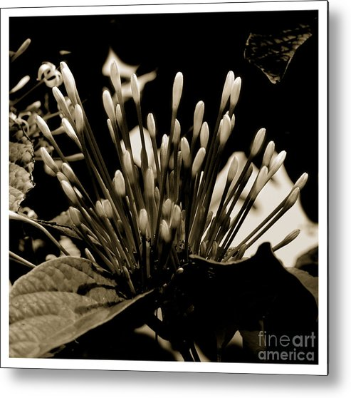 Beauty Flower Metal Print featuring the painting Florita by Son Of the Moon